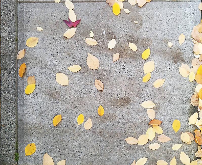sidewalk with leafs