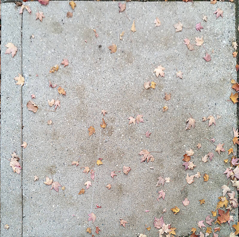 sidewalk with leafs 2