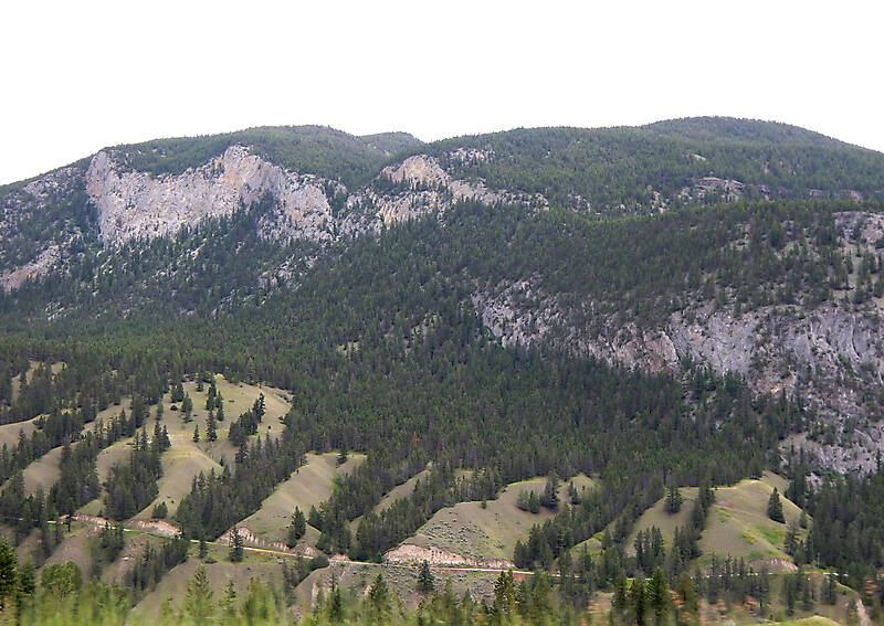 pines tree mountains background 5