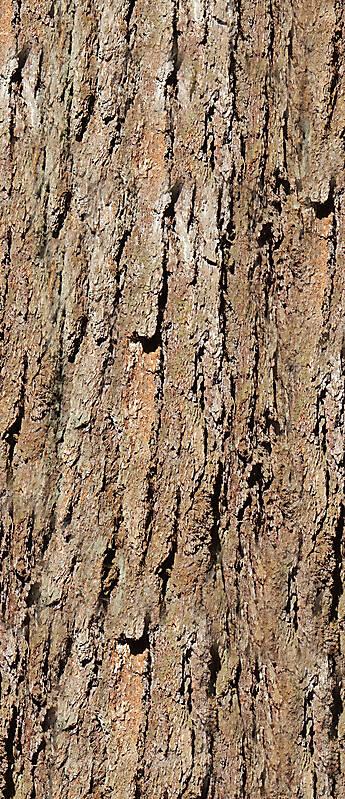big bark wood