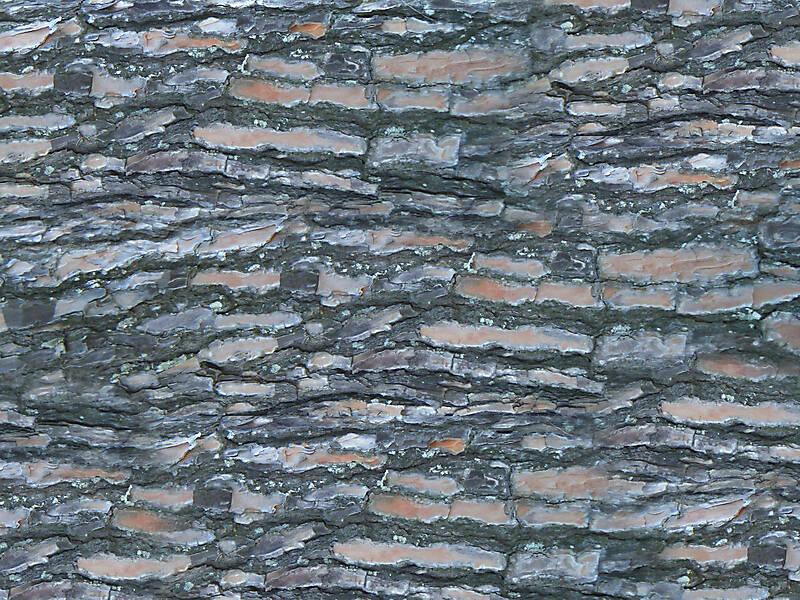 pine bark wood 3