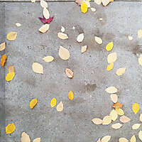 sidewalk with leafs