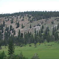 pines tree mountains background 2