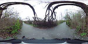 Nature JPG 360 10