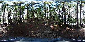 Nature JPG 360 12