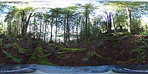 Nature JPG 360 16