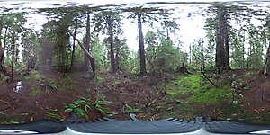 Nature JPG 360 7