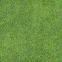 Artificial Grass 5