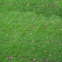 dirt grass