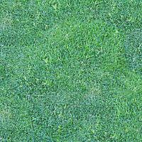 grass from gardens