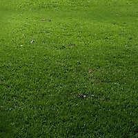grass prospective