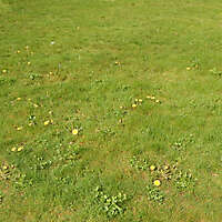 grass with yellow flowers 2