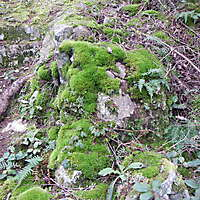 white rock with moss 3
