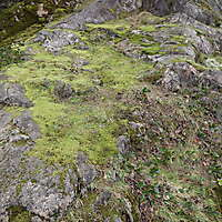 white rock with moss 8