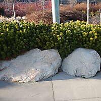 bush plants 2