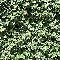 leafs yard garden wall