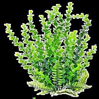marine plant acquarium