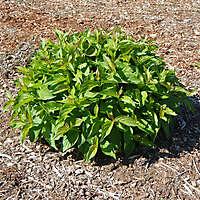 round plant