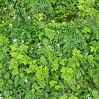 various plants garden 1