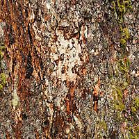 bark broken