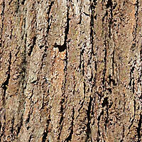 big bark wood