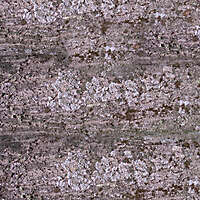 tree bark 6