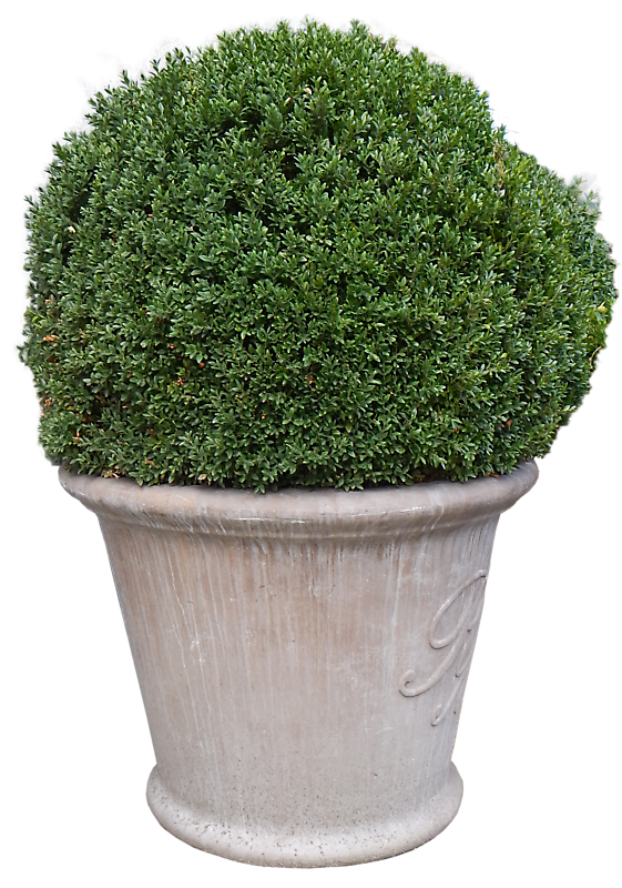 Texture bush in the vase big alpha trees lugher for Idee deco grand vase transparent