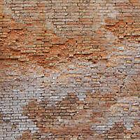 moldy bricks wall venice 11