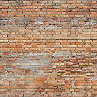 moldy bricks wall venice 17