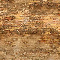 moldy bricks wall venice 23