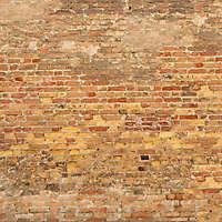 moldy bricks wall venice 24