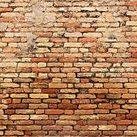 moldy bricks wall venice 25
