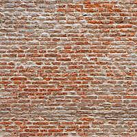 moldy bricks wall venice 2