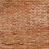 moldy bricks wall venice 3