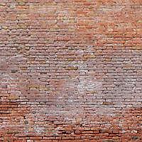 moldy bricks wall venice 6