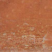 moldy bricks wall venice 9
