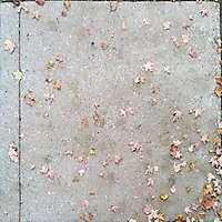 sidewalk with leafs 2