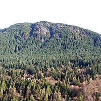 pine trees mountains