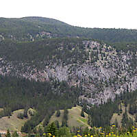pines tree mountains background 4