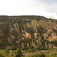 pines tree mountains background 9
