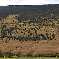 pines tree mountains landscape 11
