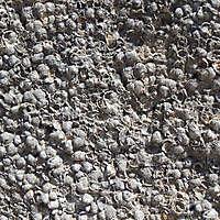shells stone