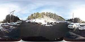 Snow trees 3