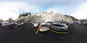 Snow trees 5