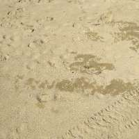 sand dry and wet