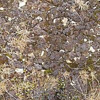 soil grows 12