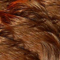 hair streight short brown