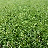 grass heavy