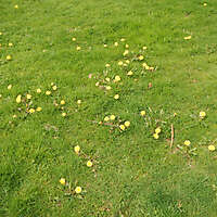 grass with yellow flowers 1