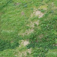 mixed grass 1